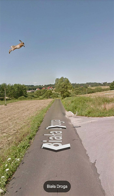 google-street-view-animais-poses-engracadas-01