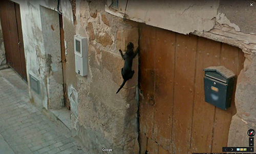 google-street-view-animais-poses-engracadas-04
