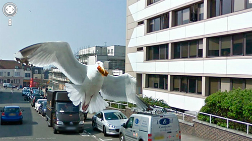 google-street-view-animais-poses-engracadas-05