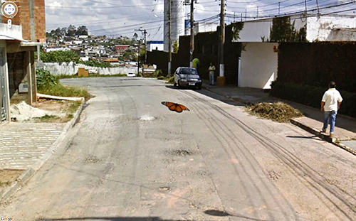 google-street-view-animais-poses-engracadas-06