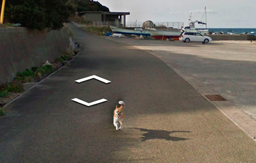 google-street-view-animais-poses-engracadas-07