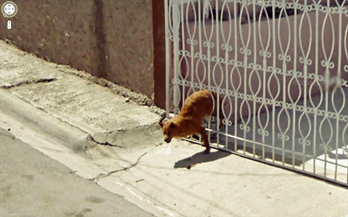 google-street-view-animais-poses-engracadas-11