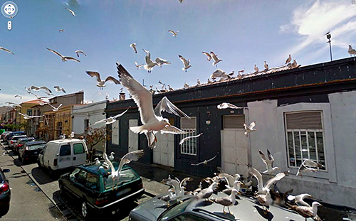 google-street-view-animais-poses-engracadas-12